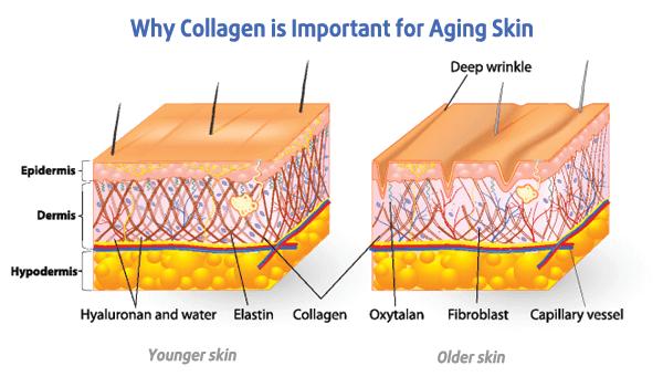 Bộ điều trị lão hóa da nâng cơ MedPeel giúp bạn bổ sung đầy đủ lượng collagen cho làn da